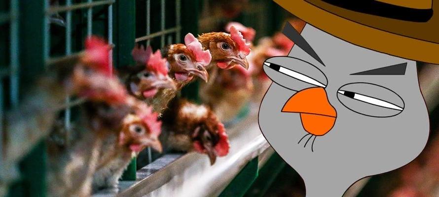 В Карелии оштрафовали приезжего бизнесмена за подозрительных куриц