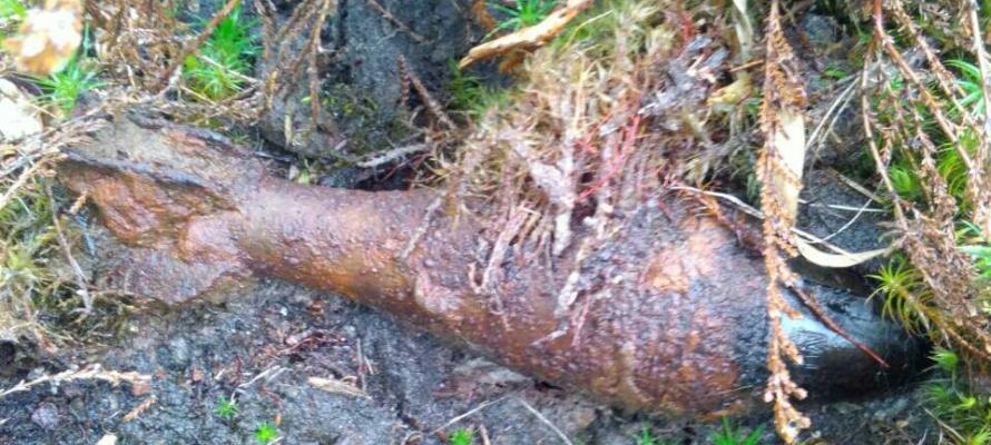Минометный снаряд времен войны обнаружен в деревне Карелии