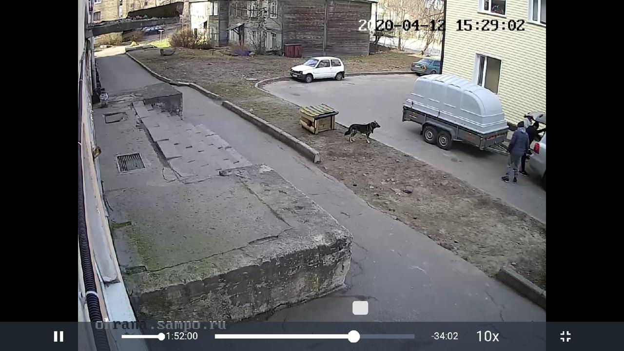 В Петрозаводске люди выбросили на улицу будку с собакой и маленькими щенками (ФОТО и ВИДЕО)