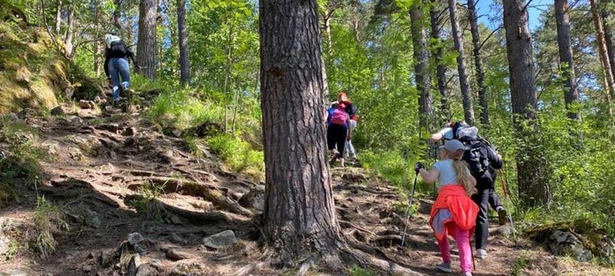 Картинка старый заяц скандинавская ходьба