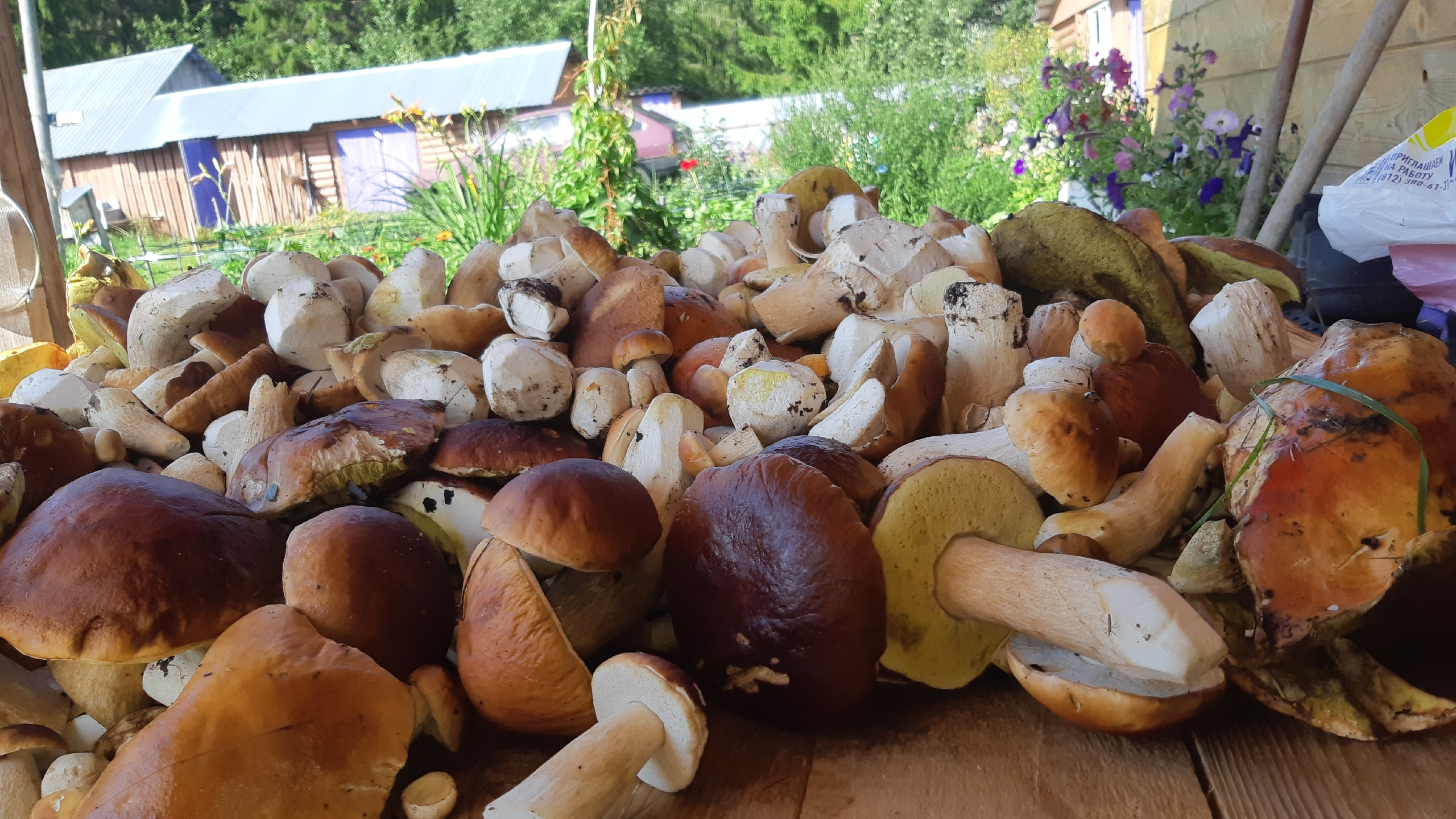 разновидности грибов в карелии с фото лучше