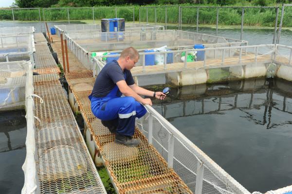 Глава Карелии: форелеводам разрешат строительство на берегах водоемов