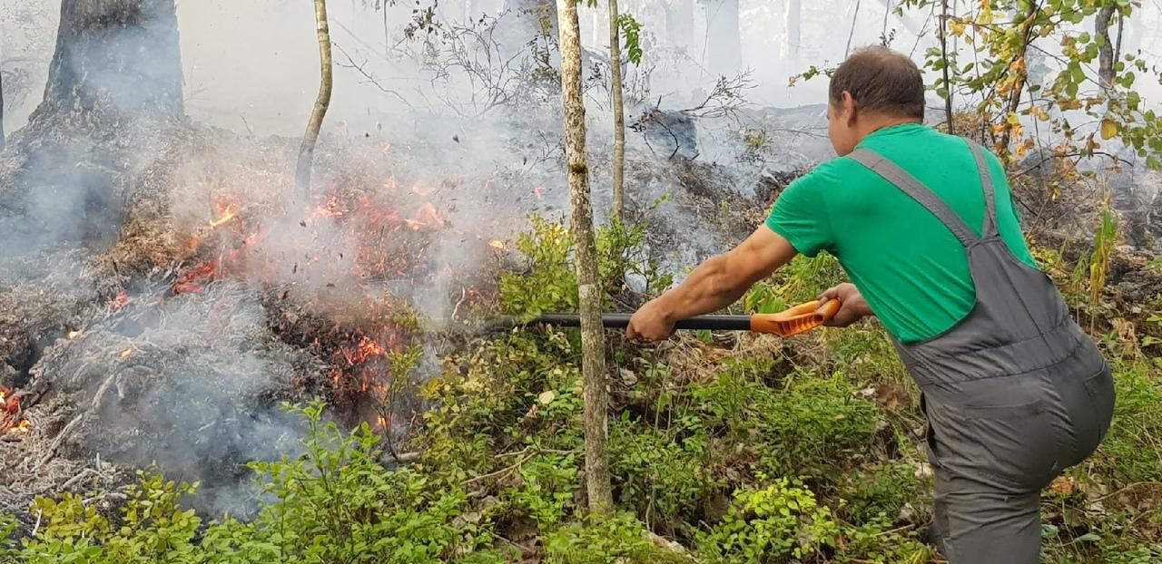 Добровольцам объяснили, как они могут помочь тушить лесные пожары в Карелии
