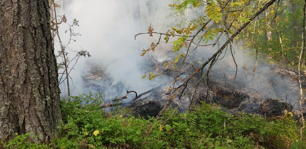 Из-за лесного пожара началась эвакуация жителей поселка в Карелии