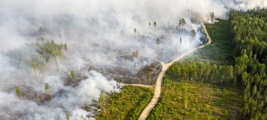 «Авиалесоохрана»: площадь лесных пожаров в Карелии выросла до 11 456 гектаров